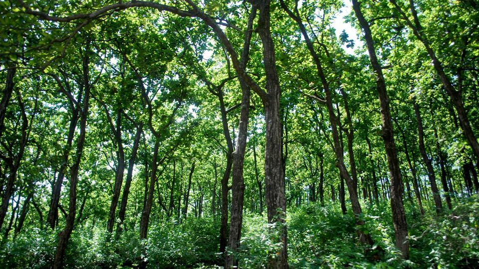 Ranchi forest cover increased by 0.86%: Report
