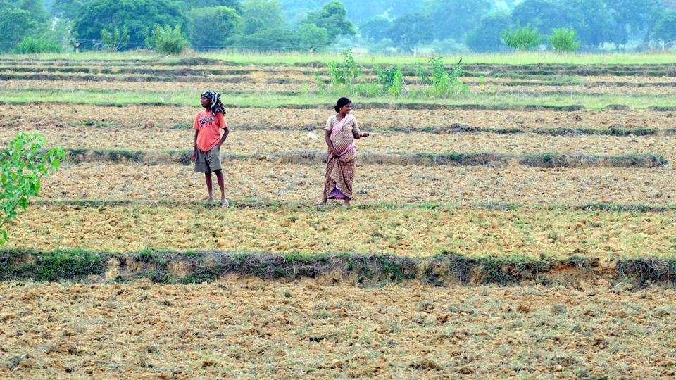 Drought fear looms large in Jharkhand as 14 districts face 40% rainfall deficit