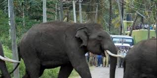 Jharkhand to bear education expenses of children if family head killed in elephant attack
