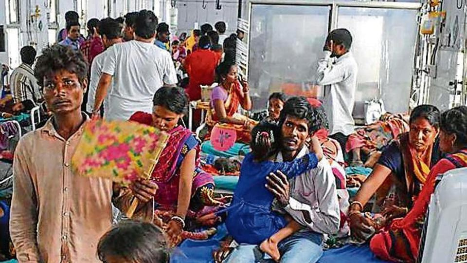 Litchi industry in Bihar faces huge loss after encephalitis outbreak
