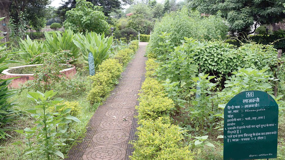Ranchi to turn herbal health city