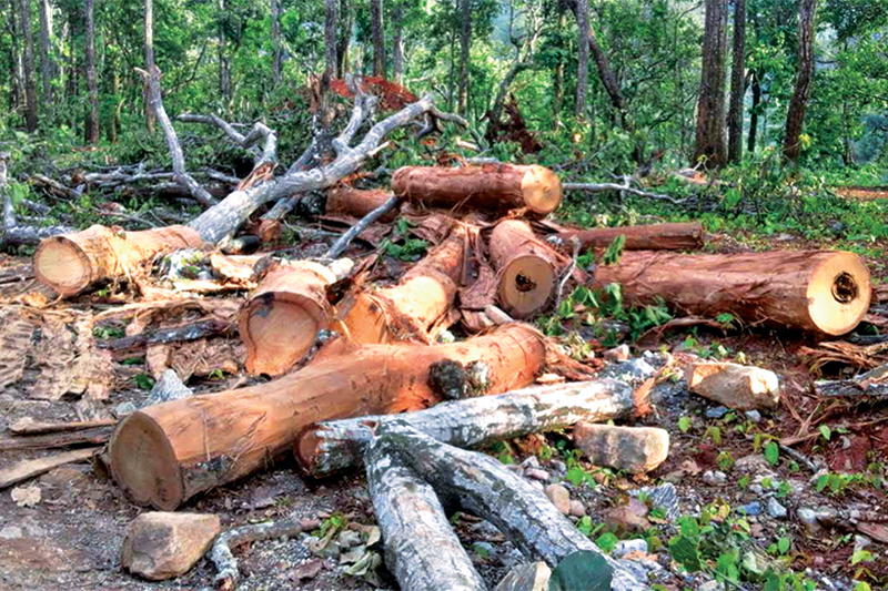 Wanted: Saviour for felled trees in Jharkhand.